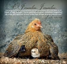 as a hen